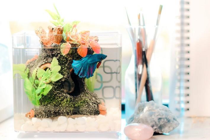Aquário para betta com pequena plantas artificiais sobre a mesa
