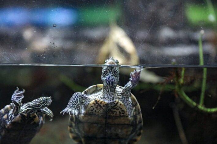 aquaterrario-tartaruga