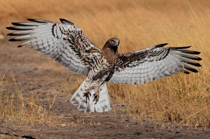 aves-de-rapina