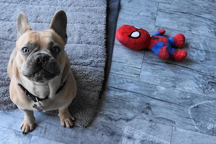 cachorro-para-doação