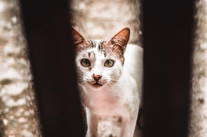um gato no centro de zoonoses
