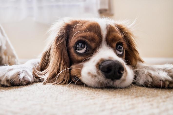 como ensinar cachorro a fazer necessidades no lugar certo