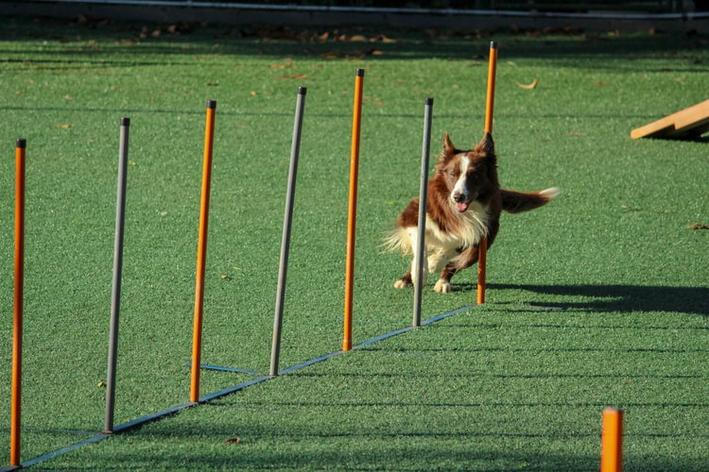exercicio-de-cachorro