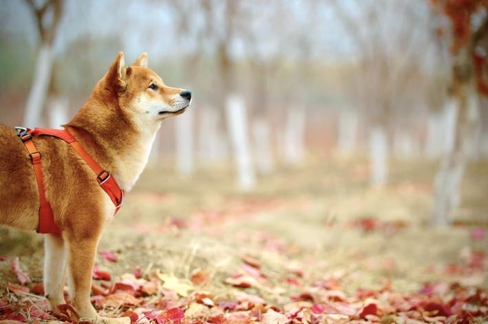 exercicio para cachorro
