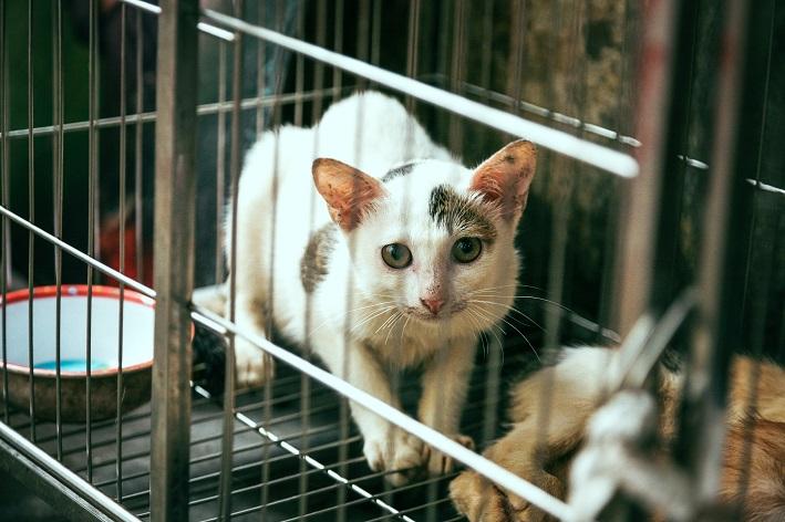 gato assustado em gaiola