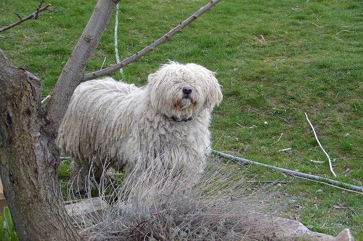 Cachorro peludo e grande
