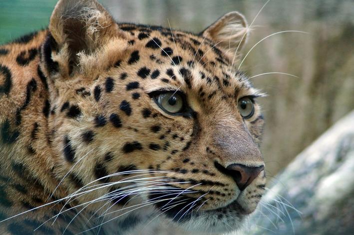 animais mais raros do mundo