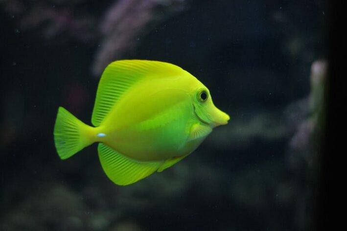 peixe macho ou fêmea