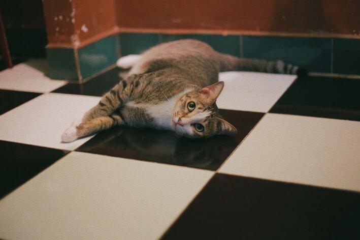 gato soltando muito pelo