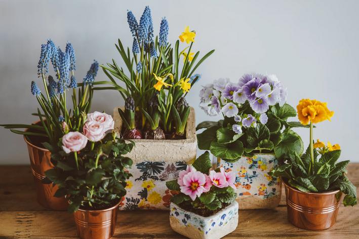 Tipos de flores para vasos