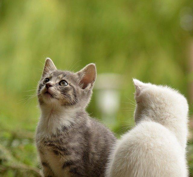 Feromônios para gatos (1)