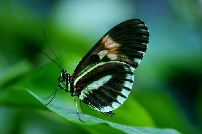 Alimentação da borboleta: saiba o que elas gostam de comer