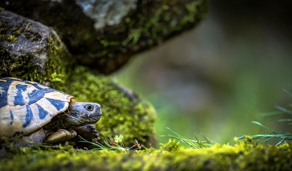 aquário-para-tartaruga