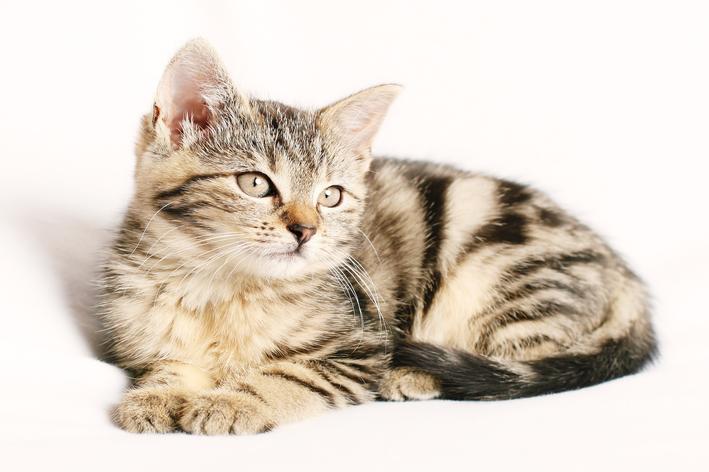 gato pode comer inhame