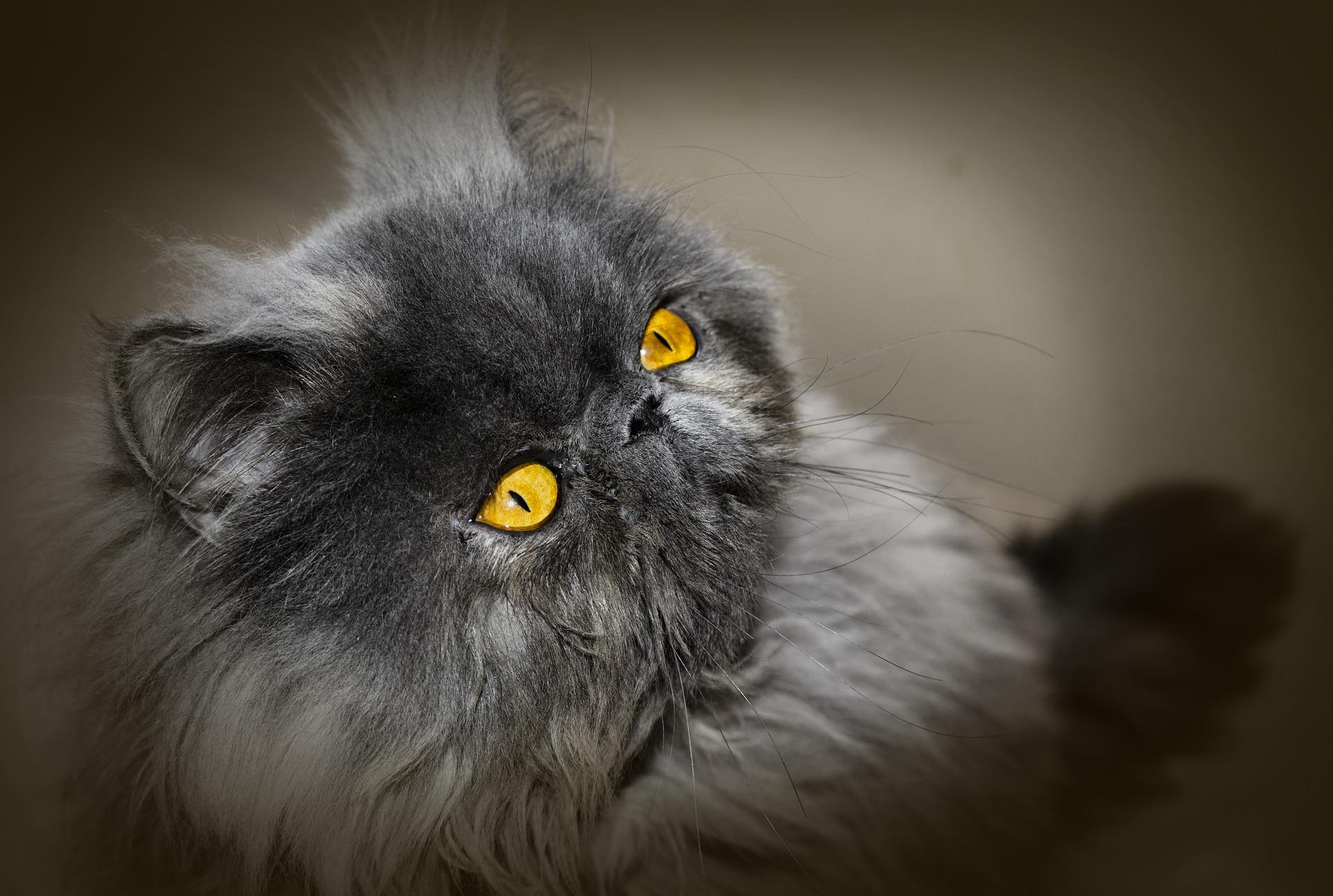 gato pode comer macarrao