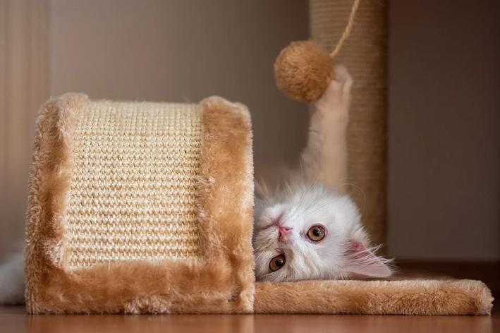 enriquecimento ambiental para gatos