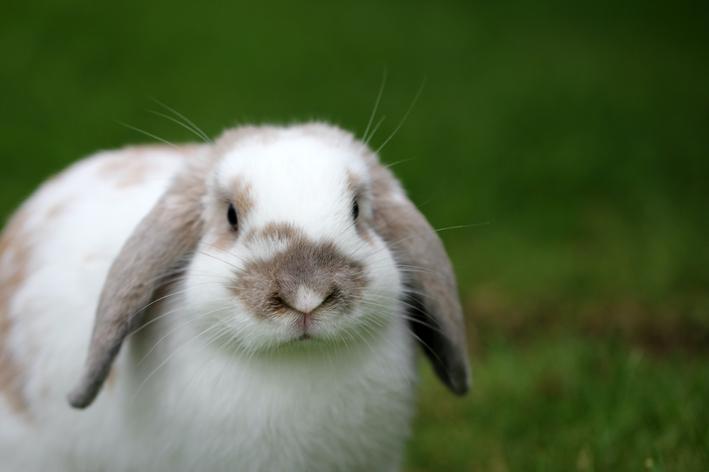 coelho pode comer beterraba
