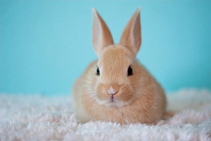 coelho pode comer laranja