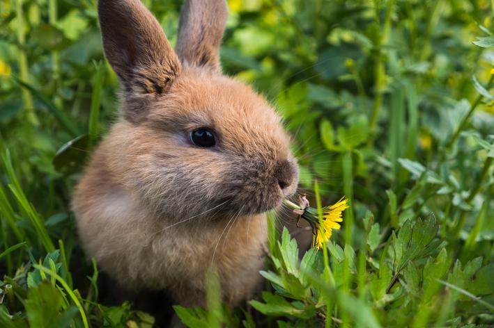 coelho pode comer mamao