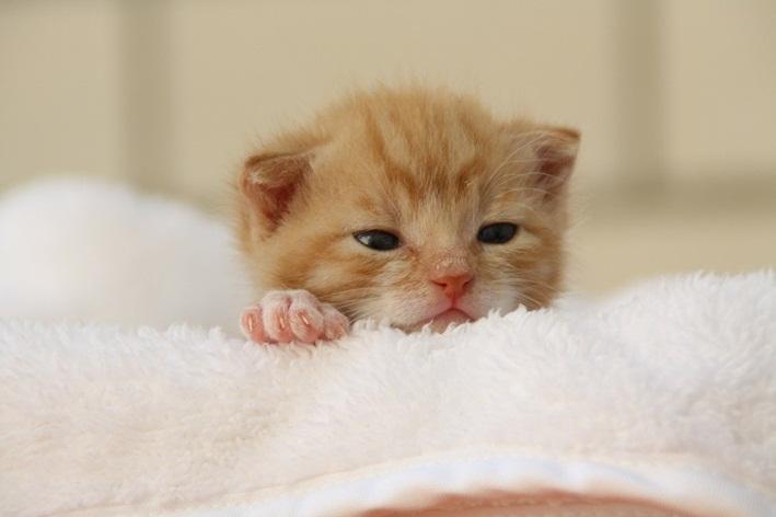 com quantos dias os gatos abrem os olhos