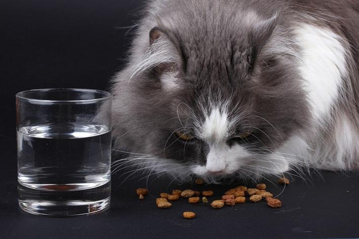 comedouro elevado para gatos