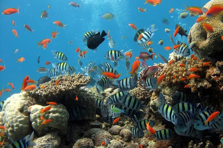 Especies de peixes