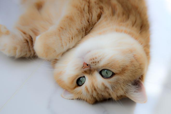 gato deitado de cabeça pra baixo