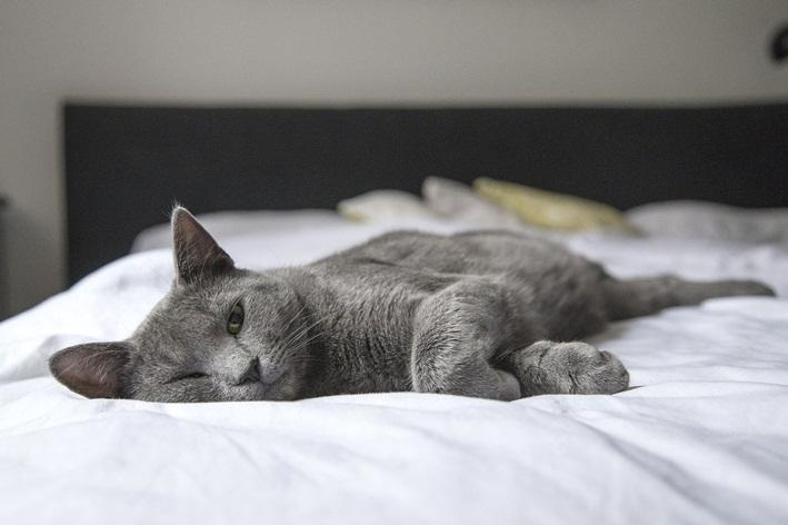 nomes de gato cinza