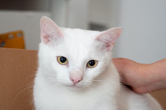 nomes para gato branco