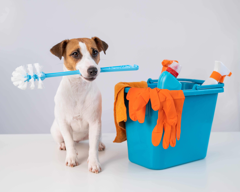 Desinfetante para cachorro Hysteril