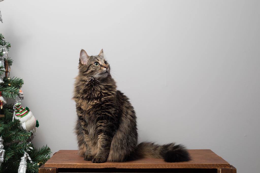 Bentonita: a areia perfeita para os gatos!