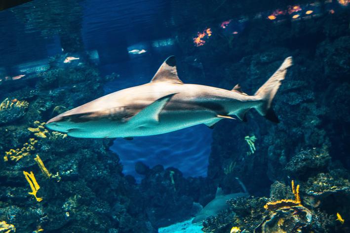 peixe grande no aquário