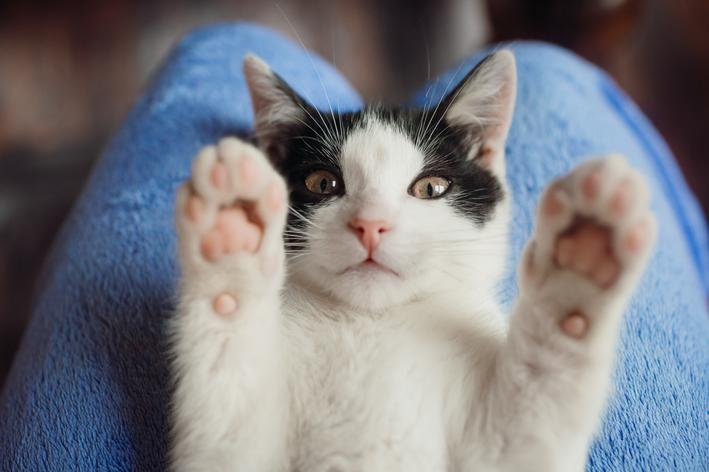 Alergia a gato? A comida do seu gato pode ajudar você!