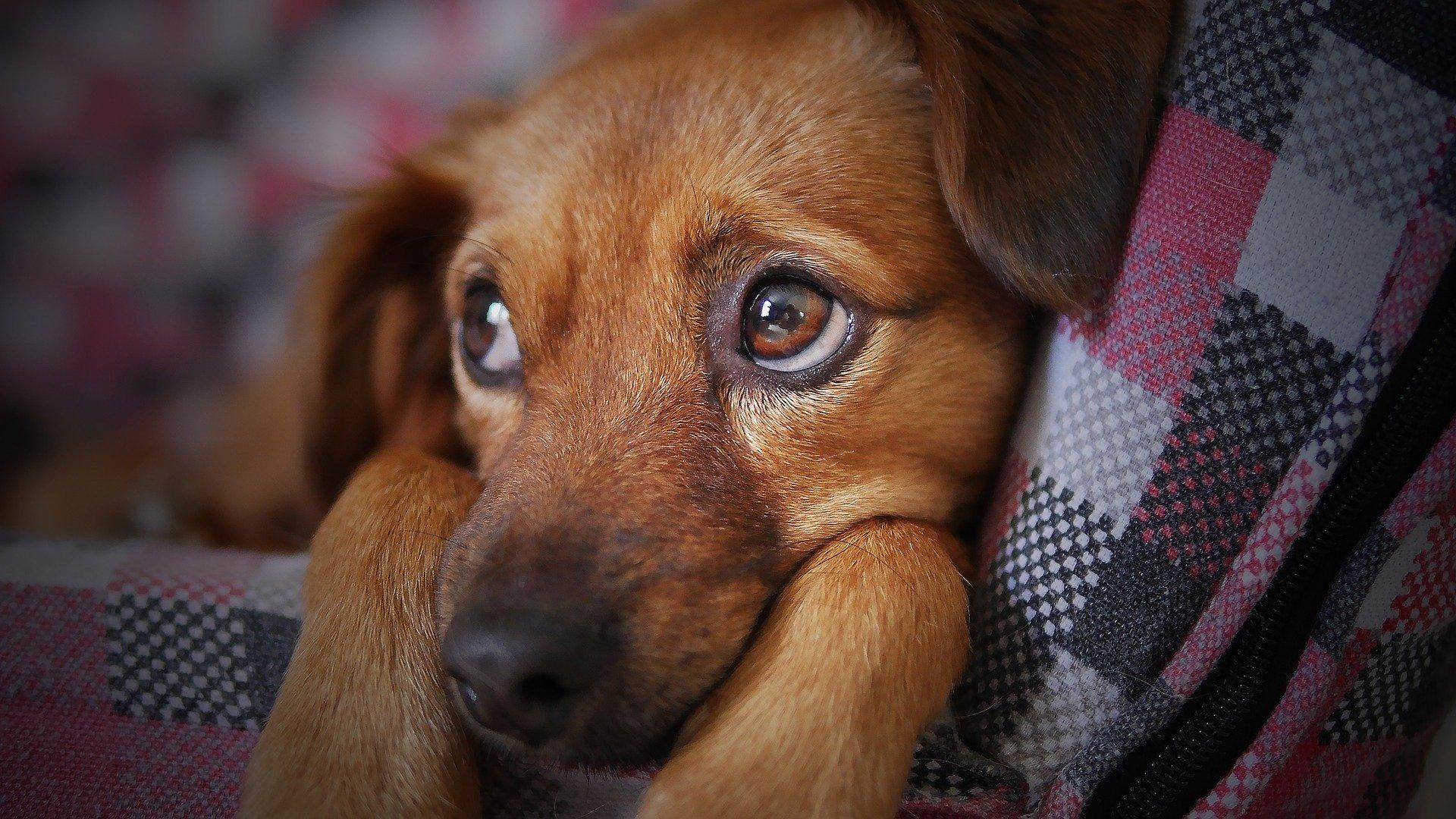 Cachorro capa da camoanha da AMPARA Animal