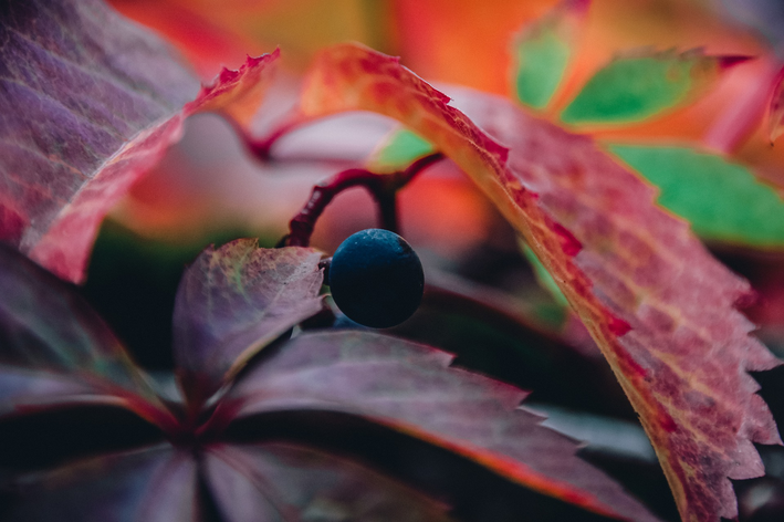 Cuidados no cultivo da uva em casa