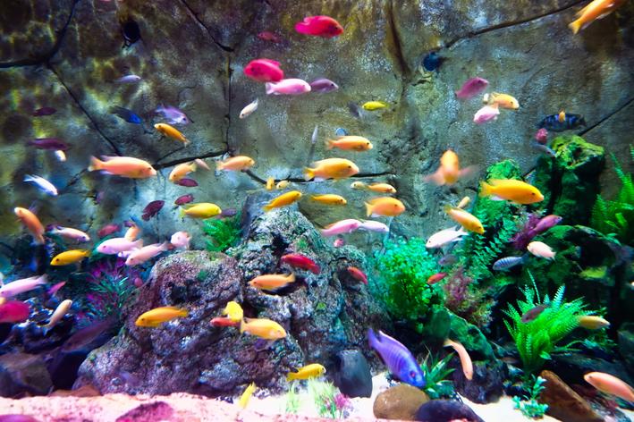 Doença de peixe: descubra as causas mais comuns