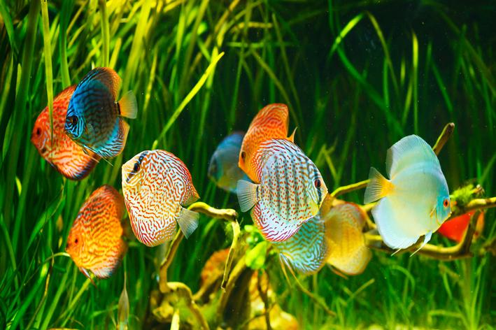 aquarismo jumbo