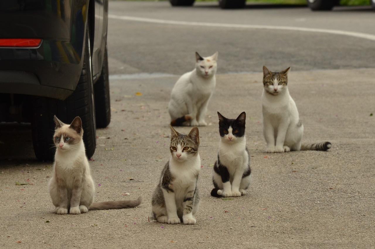 Gato abandonado: o que fazer quando encontrar um