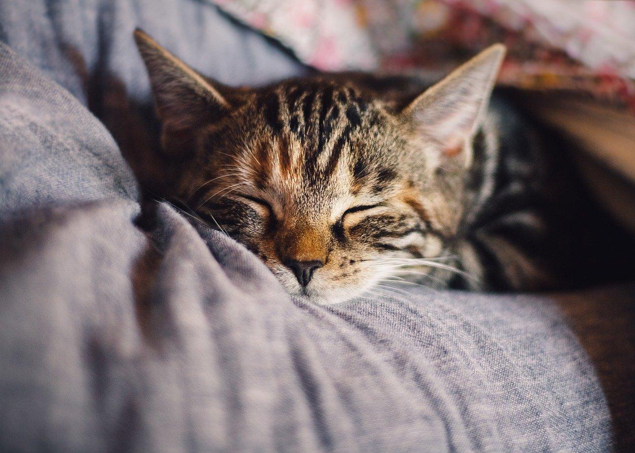 Gato dormindo muito: o que fazer?