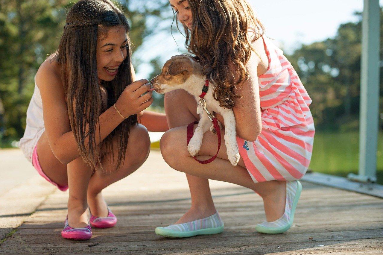 menina dando bifinho para cachorro filhote no colo de uma moça