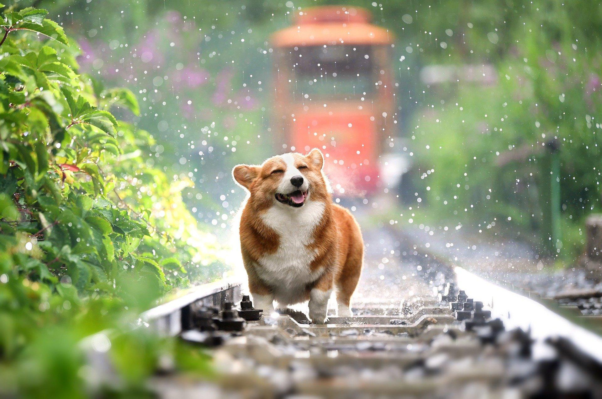 cachorro de graça