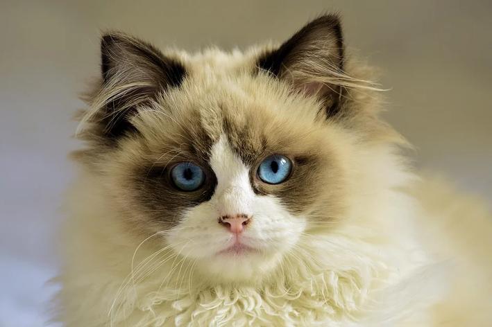filme de gato