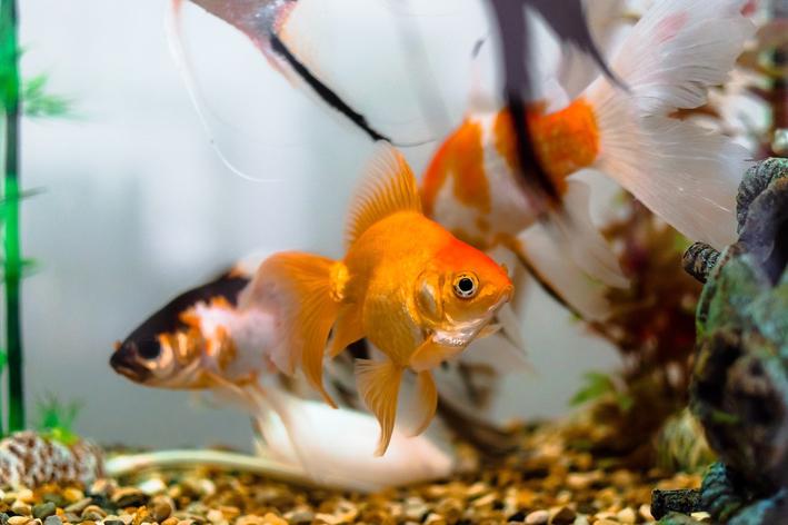 Como deixar a água do aquário cristalina