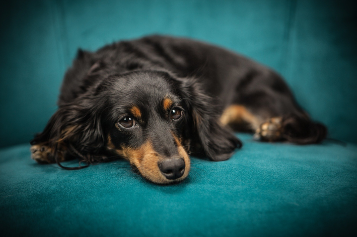 Como tirar cheiro de cachorro: 3 dicas imbatíveis
