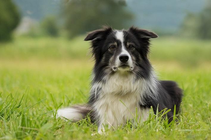 doação de ração para cachorro