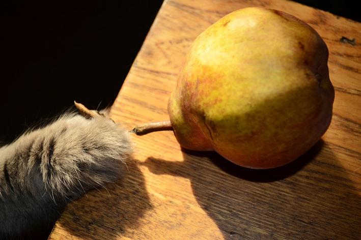 Frutas que gatos podem comer: veja 5 opções indicadas