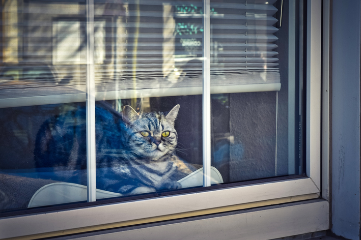Gato na janela: entenda por que eles gostam de ficar ali