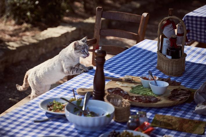Gato pode comer azeitona? Saiba mais aqui!