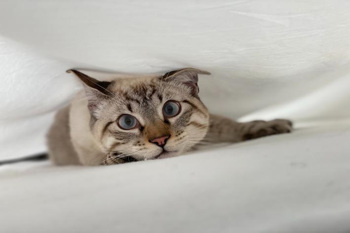 Gato pode comer mamão? Descubra!