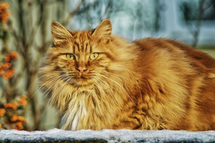 Gato tosado: dicas e cuidados com o pet